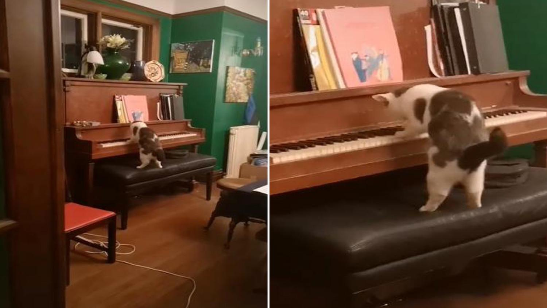 Хозяйка потеряла дар речи, когда увидела, как ее кот играет на пианино