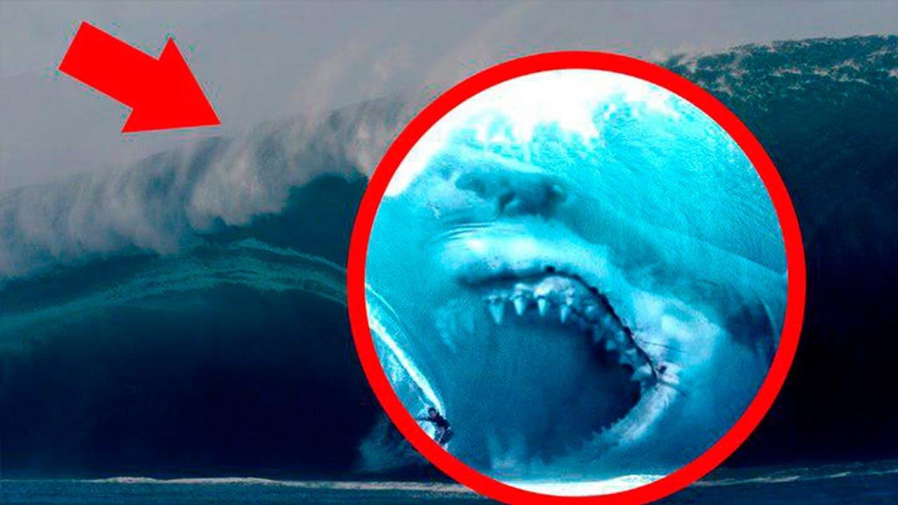 Мегалодон жив: пять видео, которые доказывают существование гигантской акулы