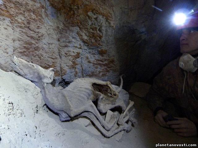 Мумии животных из Бурятии