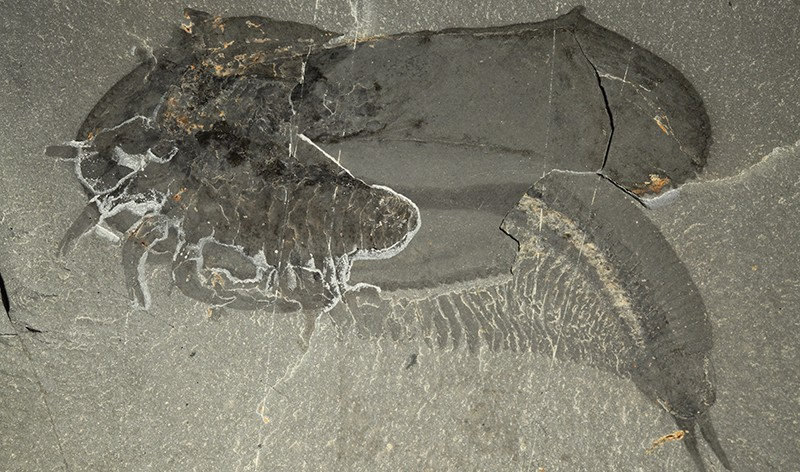 Ученые обнаружили уникальную находку возрастом 500 миллионов лет