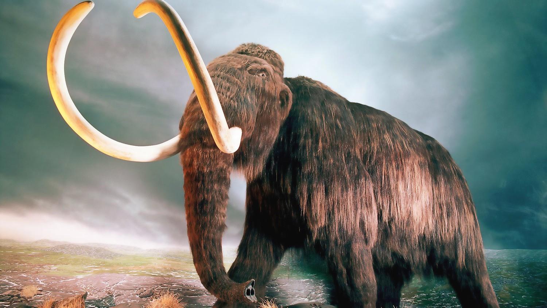 Через 10 лет по Земле будут ходить мамонты