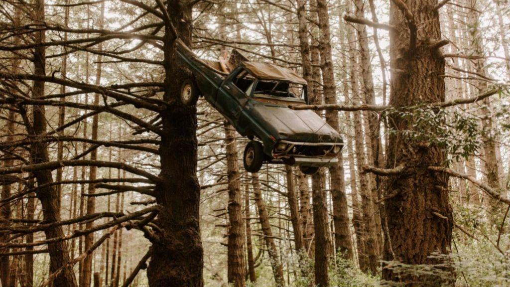 Молодожены обнаружили в лесу висящий на дереве автомобиль