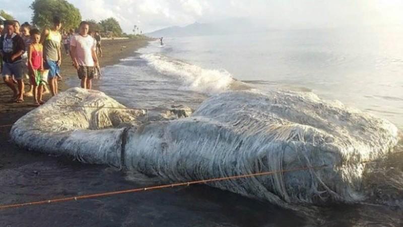 На побережье Филиппин выбросило огромного странно пахнущего монстра