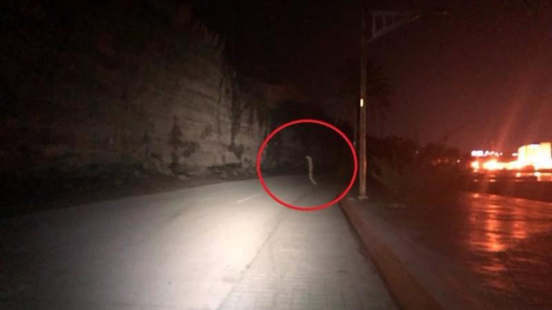 Житель Мексики запечатлел переходящего дорогу гигантского червя