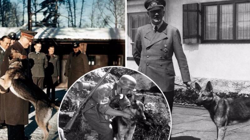 С какой целью нацисты учили собак читать и писать?