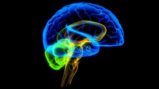Ученые научились выборочно восстанавливать и стирать память