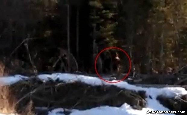 В Канаде сняли на видео снежного человека