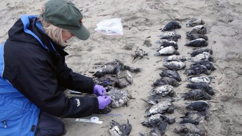 Земля в опасности: птицы стали первыми жертвами грядущей катастрофы