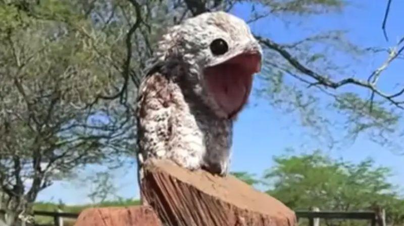 Птица с ужасающим внешним видом напугала жительницу Колумбии: видео