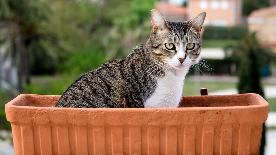 Чем кормить кошку после стерилизации: корма не только