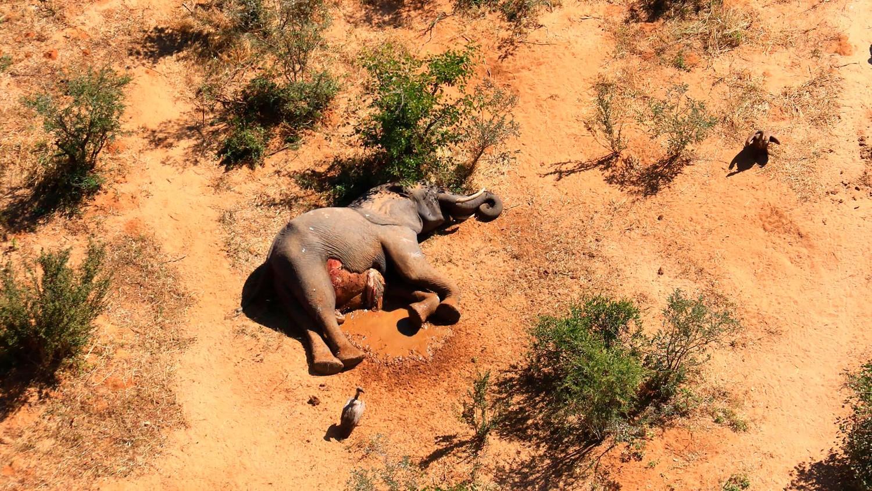 В Южной Африке неизвестная болезнь продолжает убивать слонов