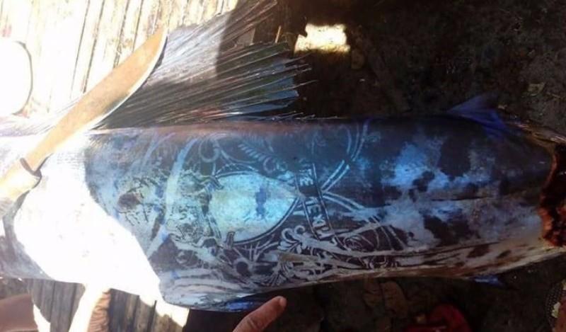 На Филиппинах поймана рыба с татуировками