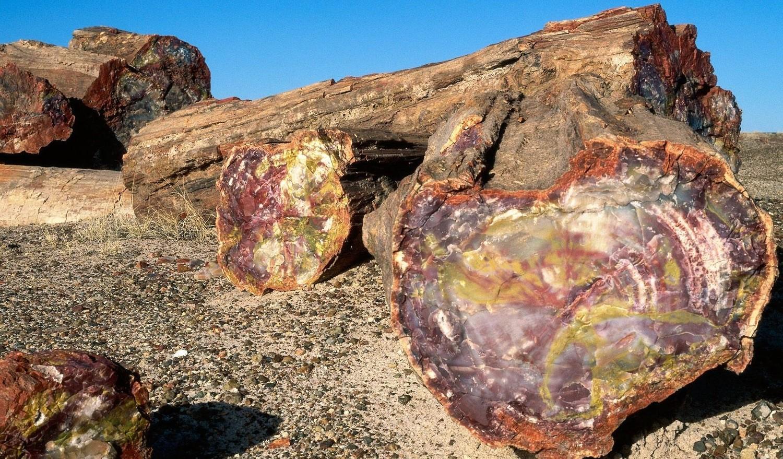 Аризонские деревья-самоцветы поражают своей красотой